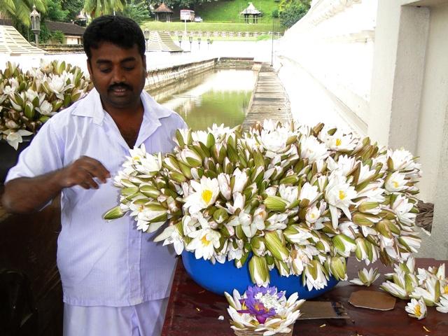 Dalada Maligawa, Światynia Zęba Buddy - przygotowanie kwiatów na ofiary (Kandy, 2011)