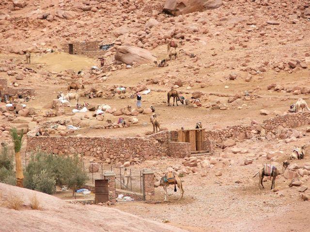 Obozowisko z wielbłądami na których można wjechać na górę Synaj (2008)