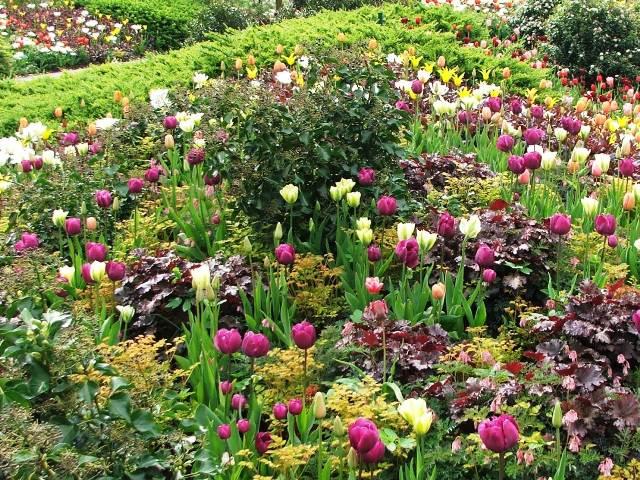 Bogactwo kolorów wiosennych kwiatów (Holandia, 2008)