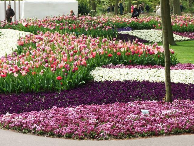 Różnorodne zestawienia kolorystyczne, tym razem fiolety (Holandia, 2008)