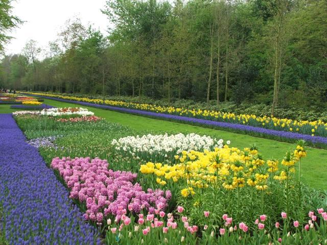 Wiosna w ogrodzie Keukenhof (Holandia, 2008)