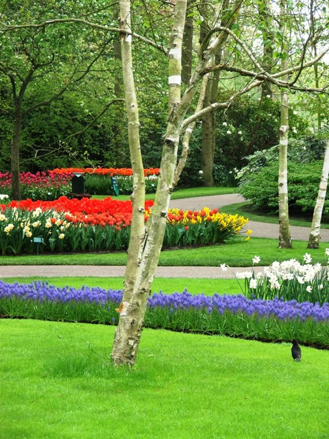 Keukenhof jest parkiem w stylu angielskim (Holandia, 2008)