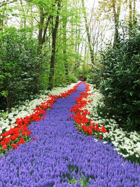 Rzeka z kwiatów w Parku Keukenhof (Holandia, 2008)