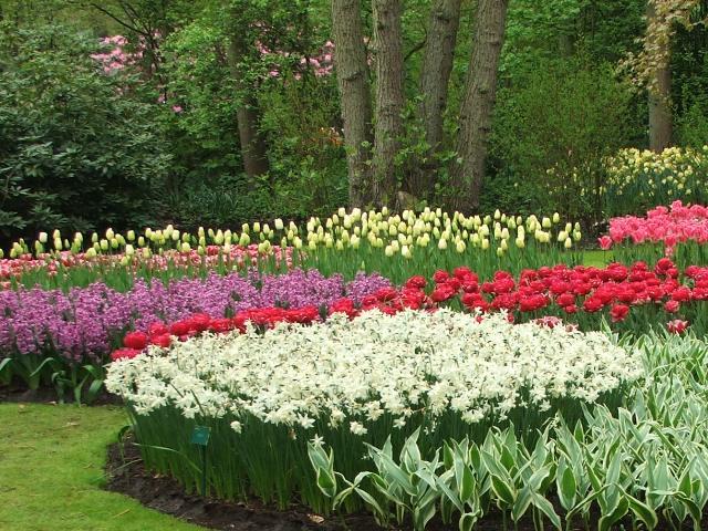 Miliony tulipanów i nie tylko (Holandia, 2008)