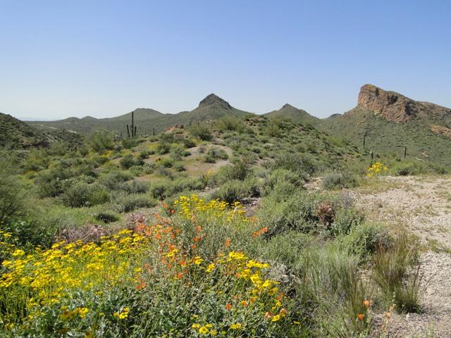 Apache trail (2013)