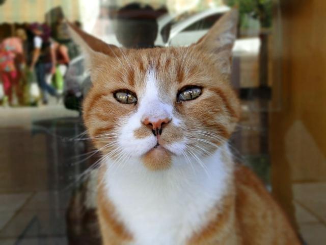 Kot z miasta Kos (21-28.09.2013)