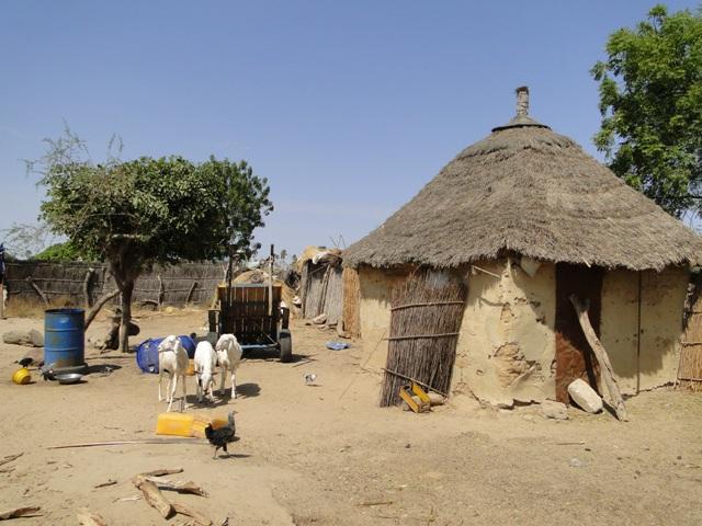 Wizyta w jednej z wiosek w drodze powrotnej do Gambii (10.01.2014, siódmy dzień objazdu)
